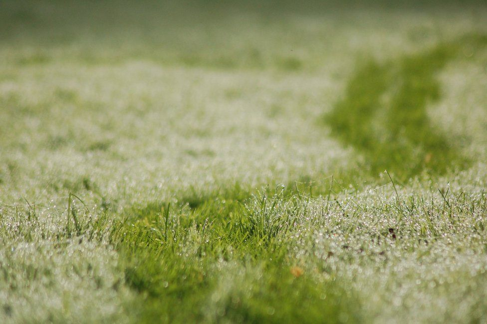Dew on the grass in Cornwall