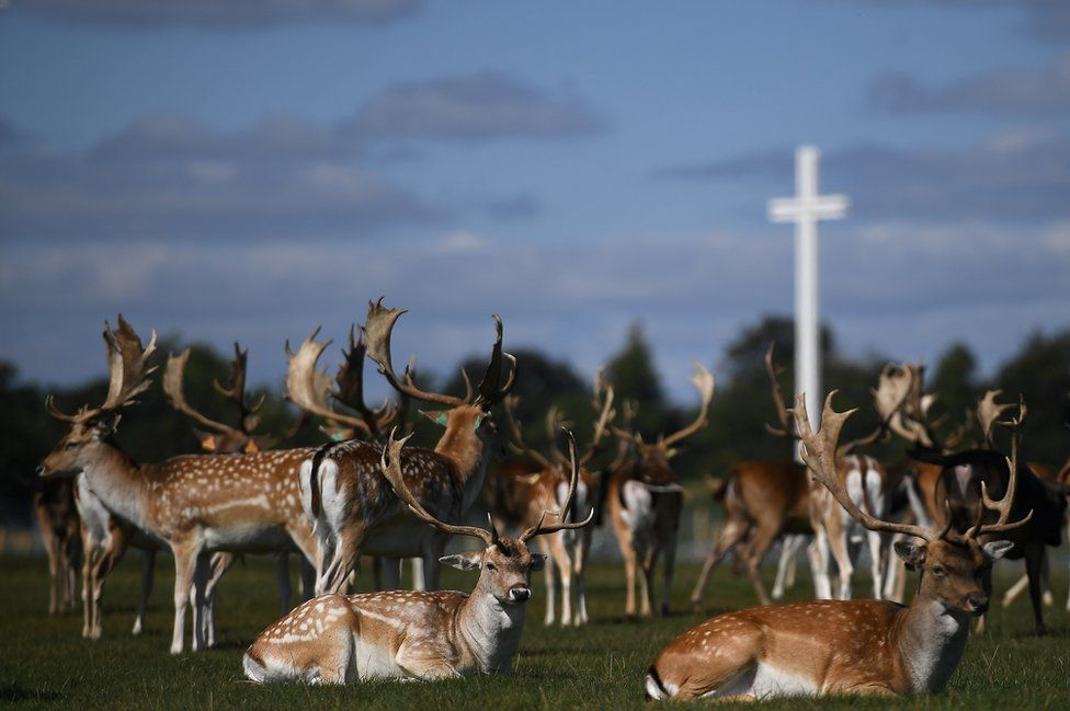 Deer rest in front of the Papal cross during sunny weather at the Phoenix Park