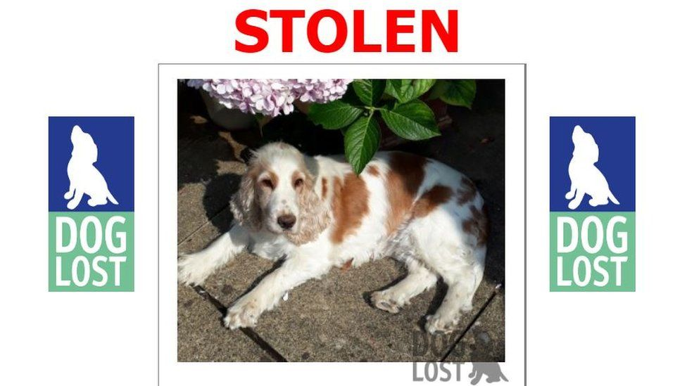 Daisy's Dog Lost poster
