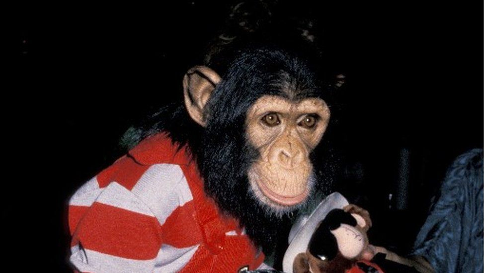 Bubbles the chimpanzee