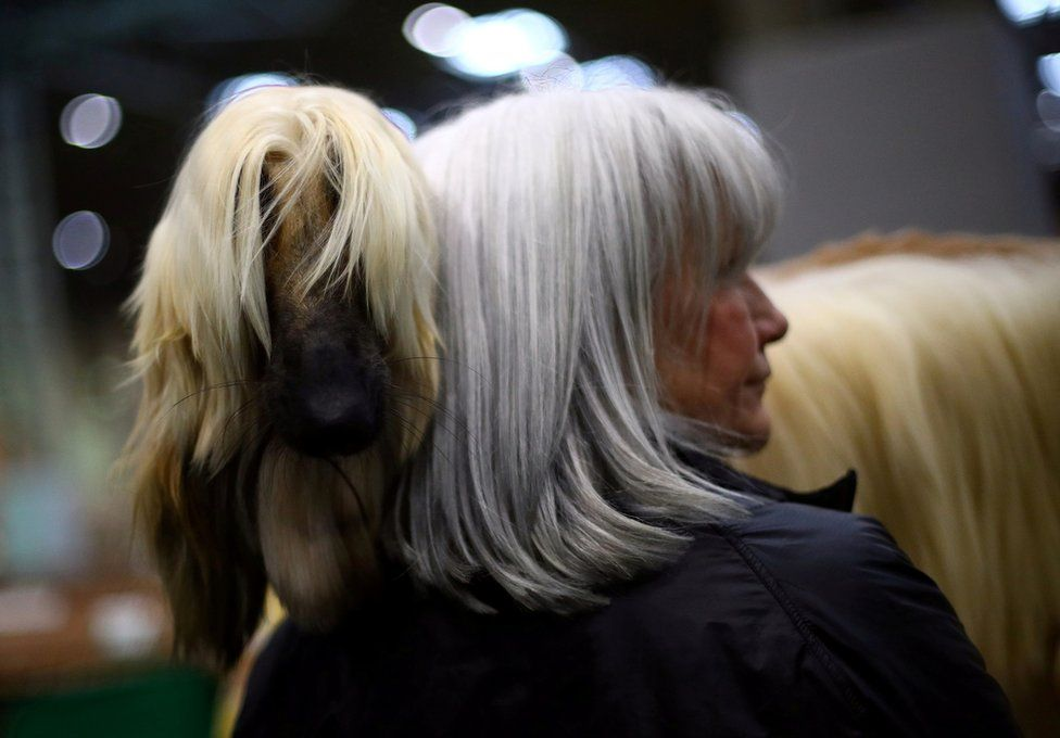 An Afghan Hound stands with its owner