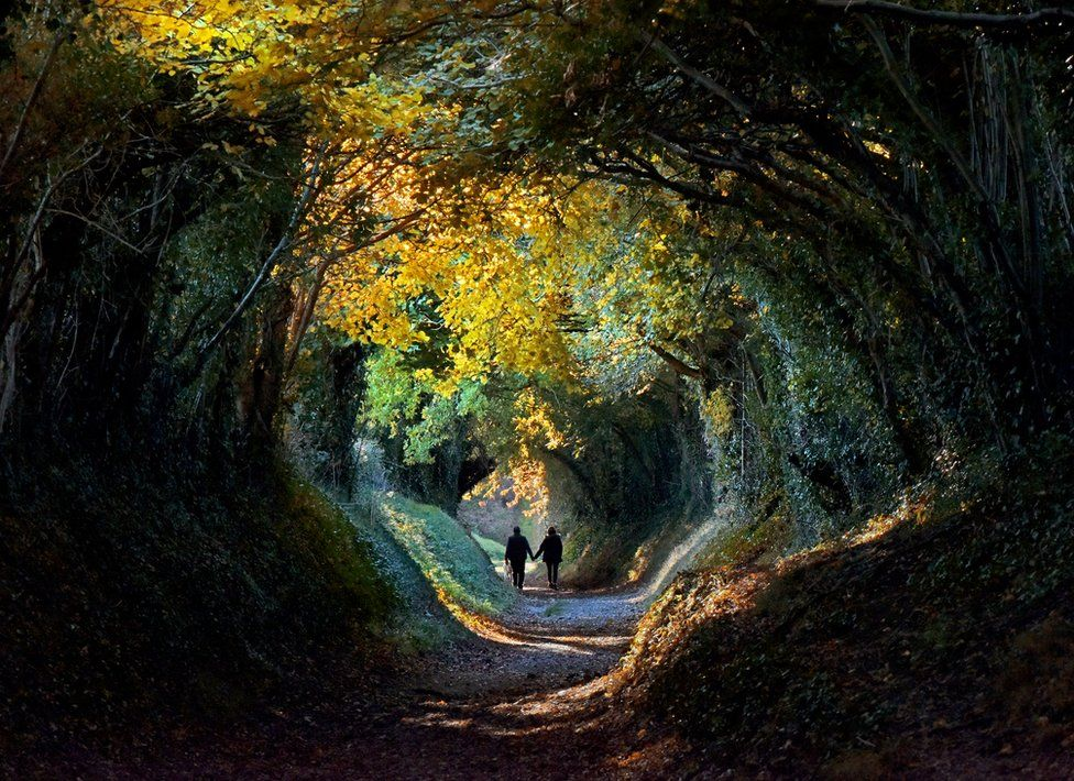 Tree tunnel with people walking through