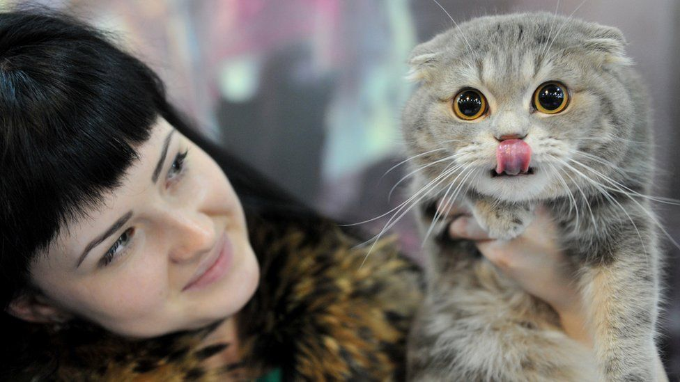 A woman and her Scottish Fold cat pose during a cat exhibition in Bishkek on March 23, 2013. Cat lovers from Kyrgyzstan, Kazakhstan and Uzbekistan took part in the exhibition.