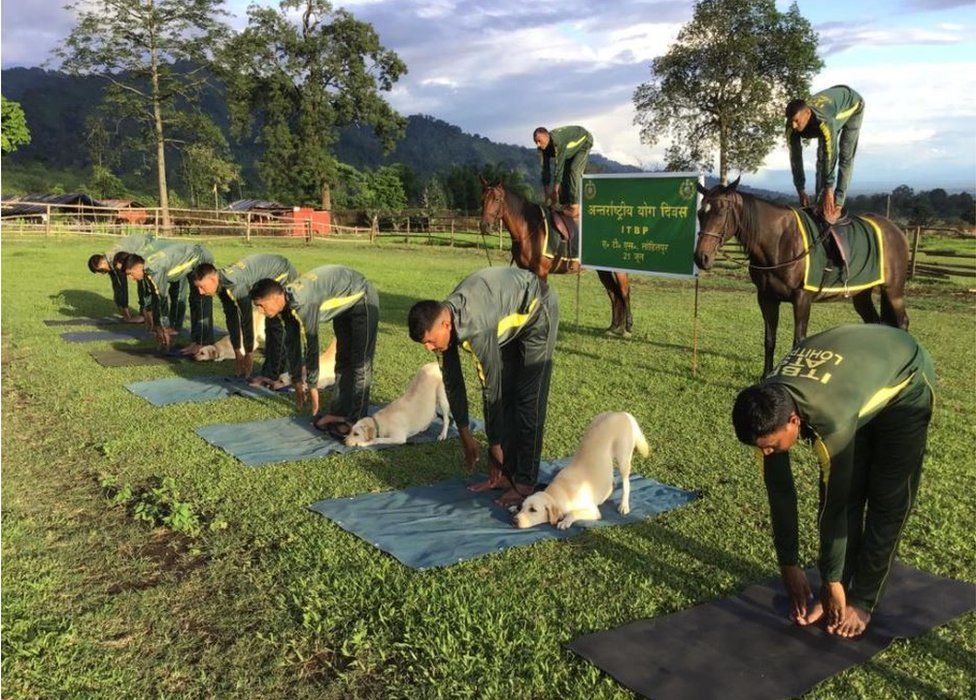 Dogs and horses doing yoga alongside Indo-Tibetan border police