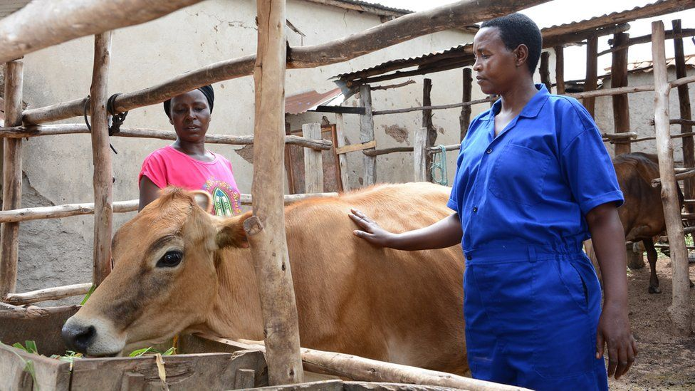 Jeanette Kanyange and Clarisse Nyinawumuntu stand next to Jersey cow