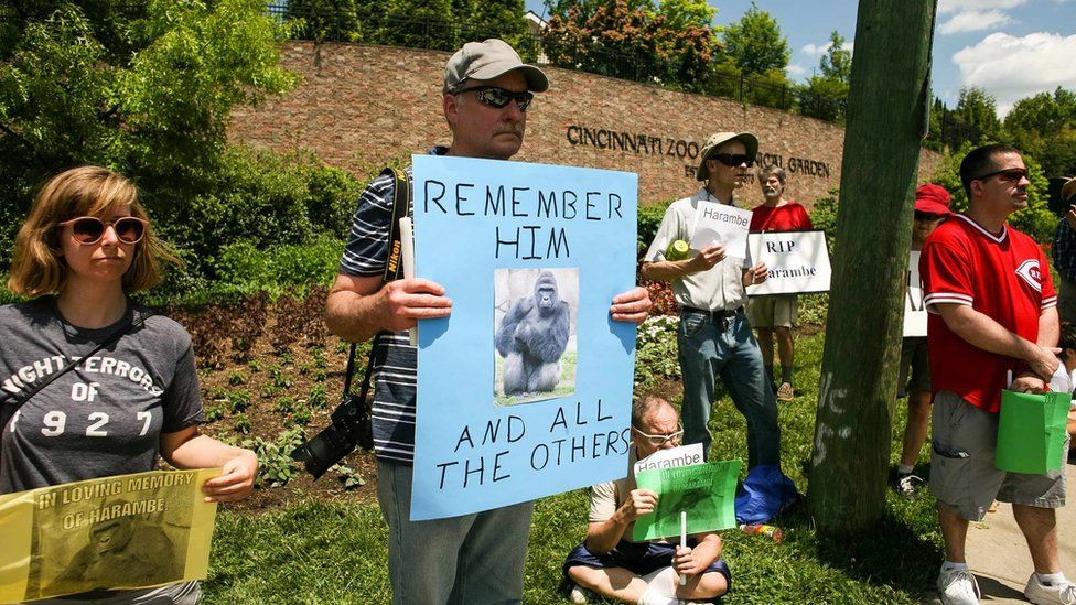 People attending a vigil outside the Cincinnati Zoo and Botanical Garden hold placards mourning Harambe (30 May 2016)