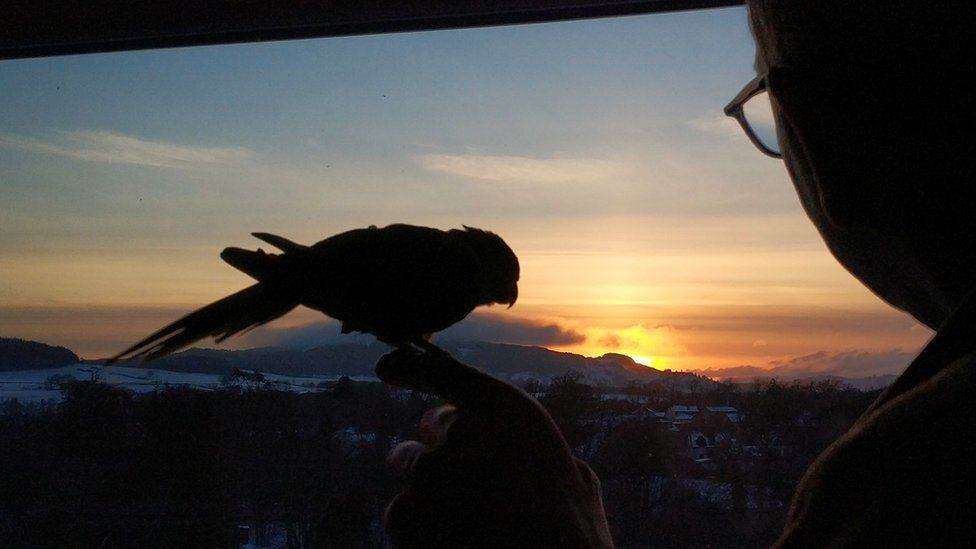 Parrot and sunset