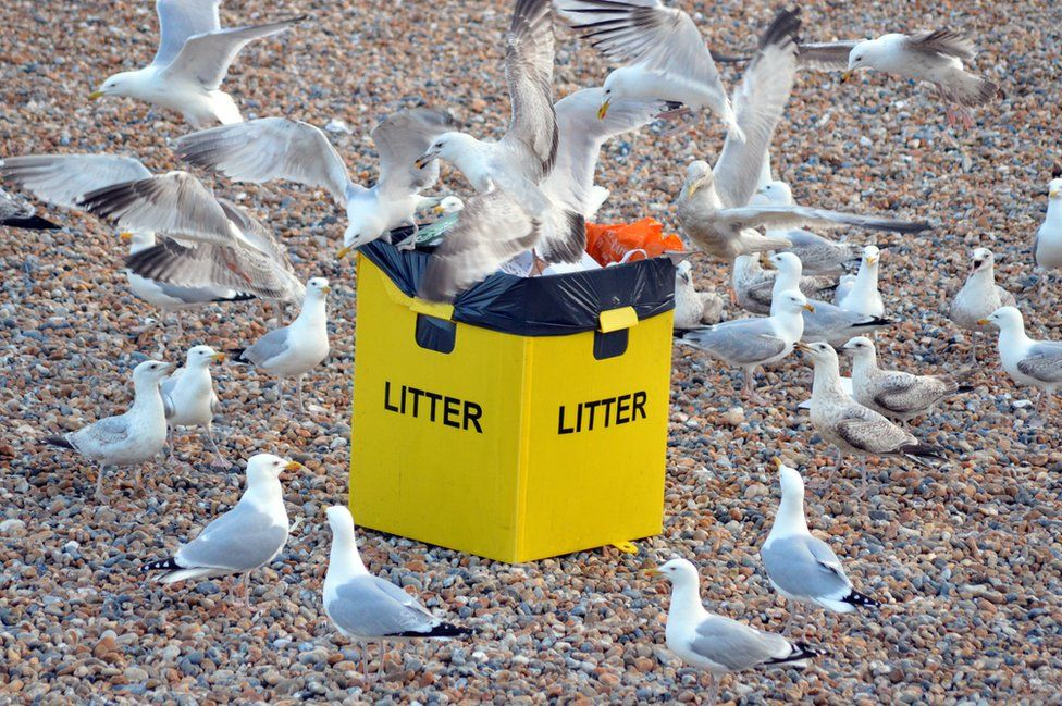 Gulls in Brighton