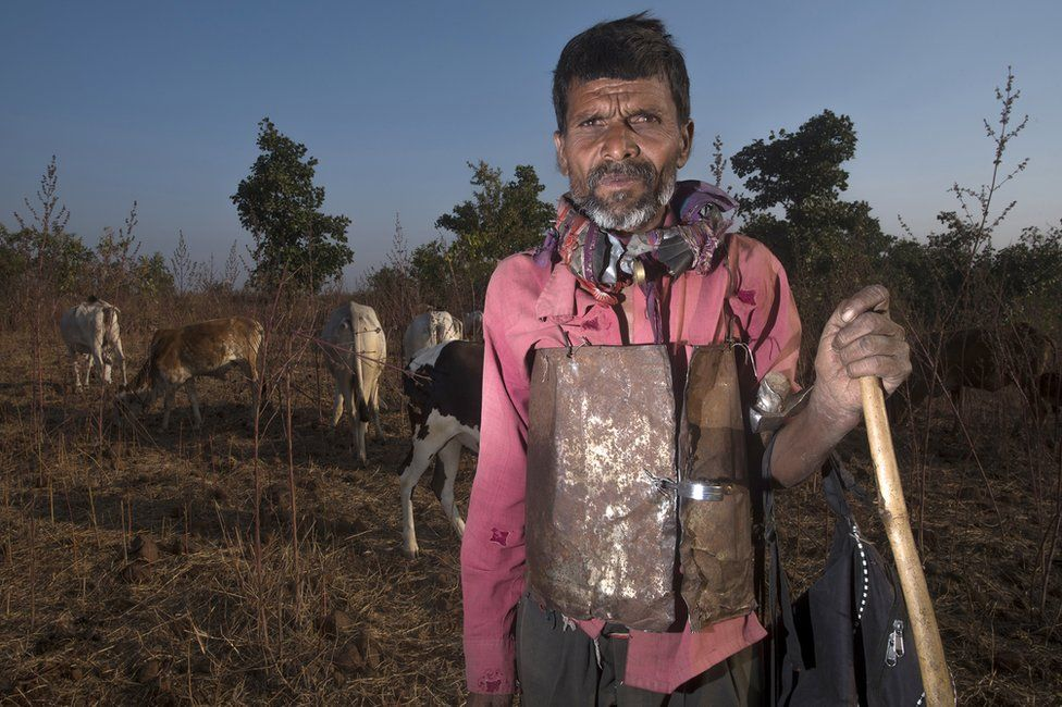 Cattle herders are wearing shields in the jungle