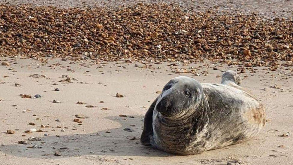 Seal on Highcliffe beach