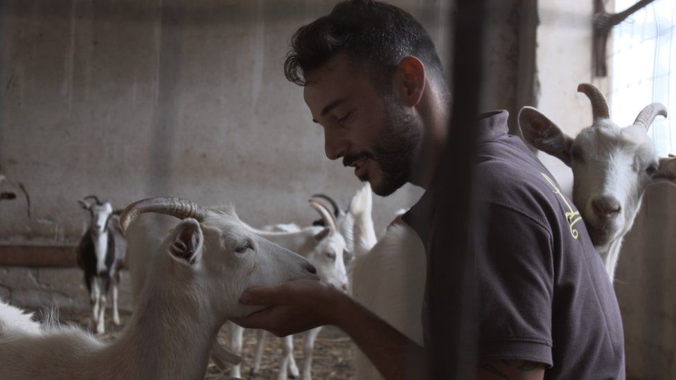 Simone and his goats