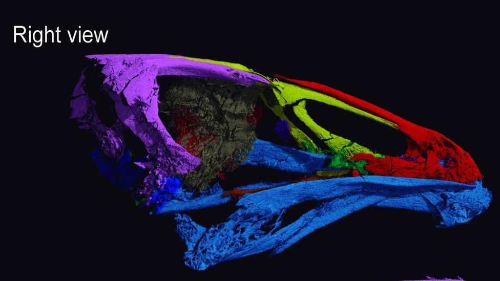 Scan of the bird's skull