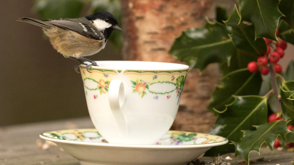 Bird on cup and saucer