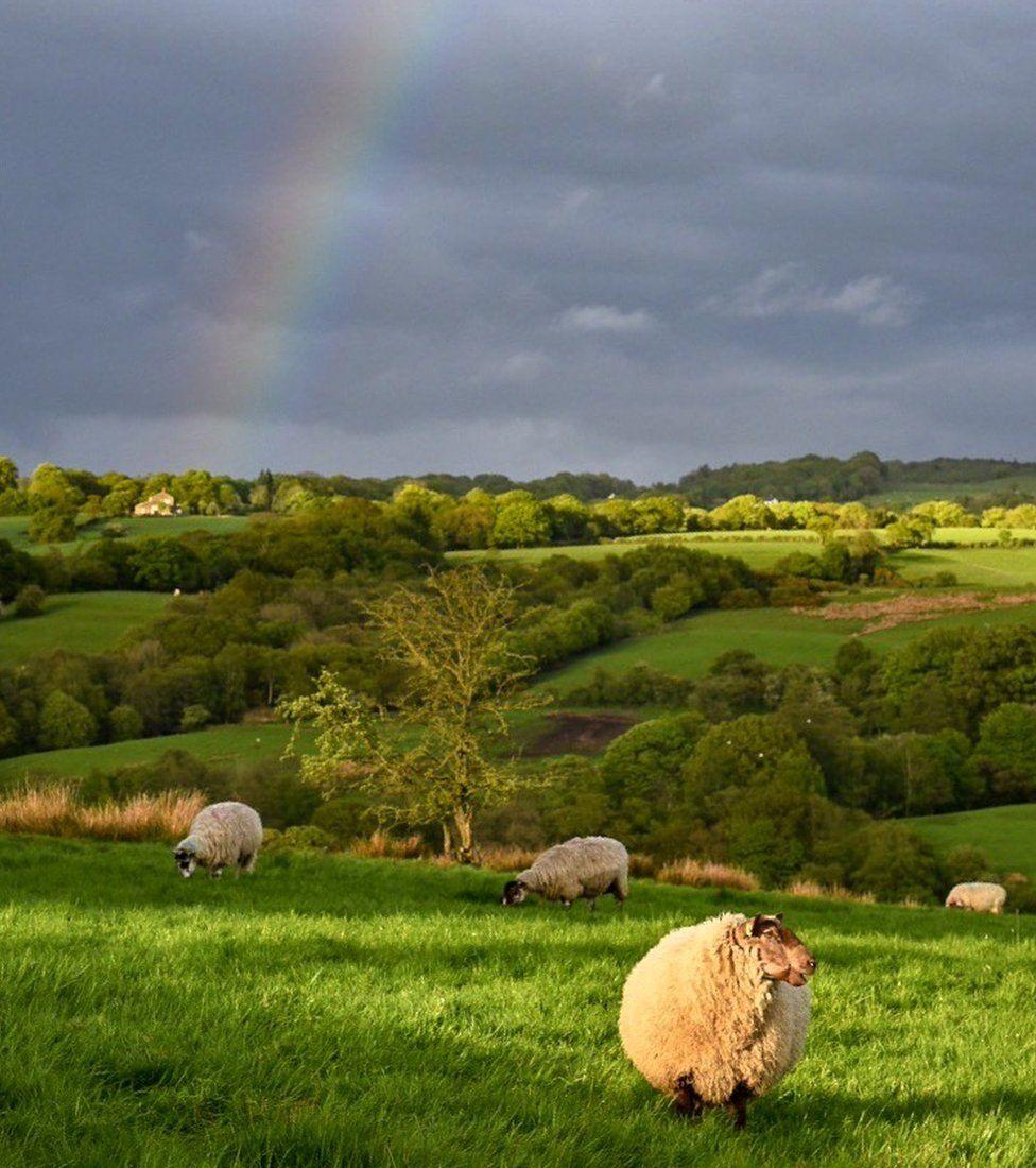 A rainbow over fields