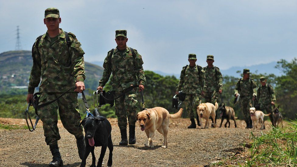 Colombian soldiers walk with their sniffer-dogs near a minefield used for training in a rural area of Cali, Colombia