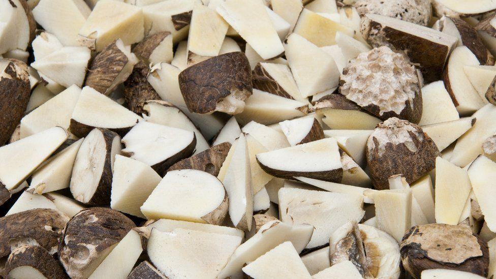 Chopped tagua seeds