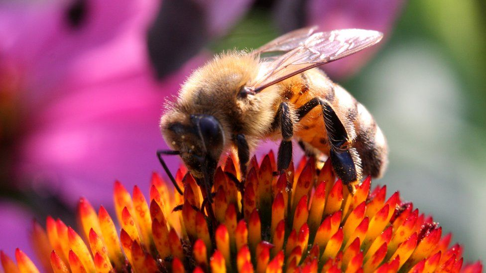 A honey bee on a plant