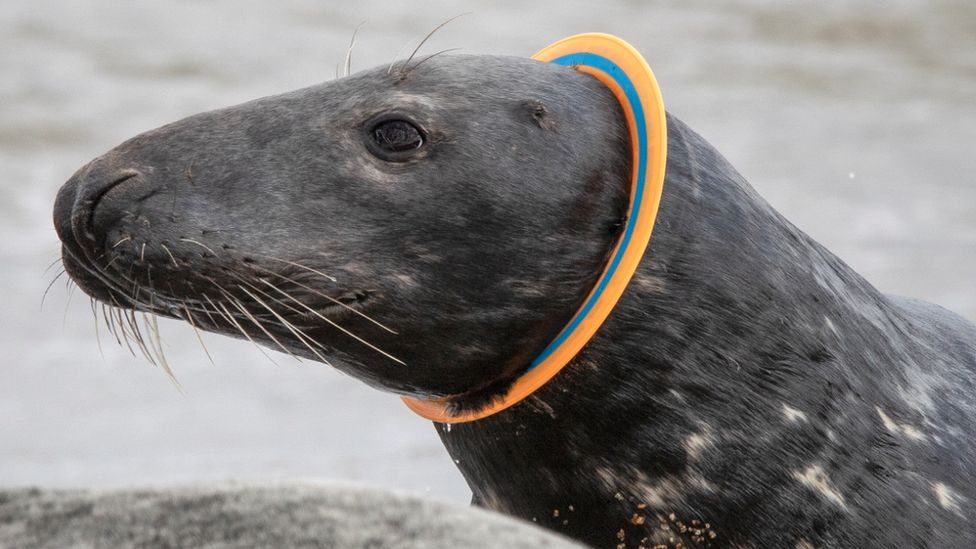Seal with ring around neck