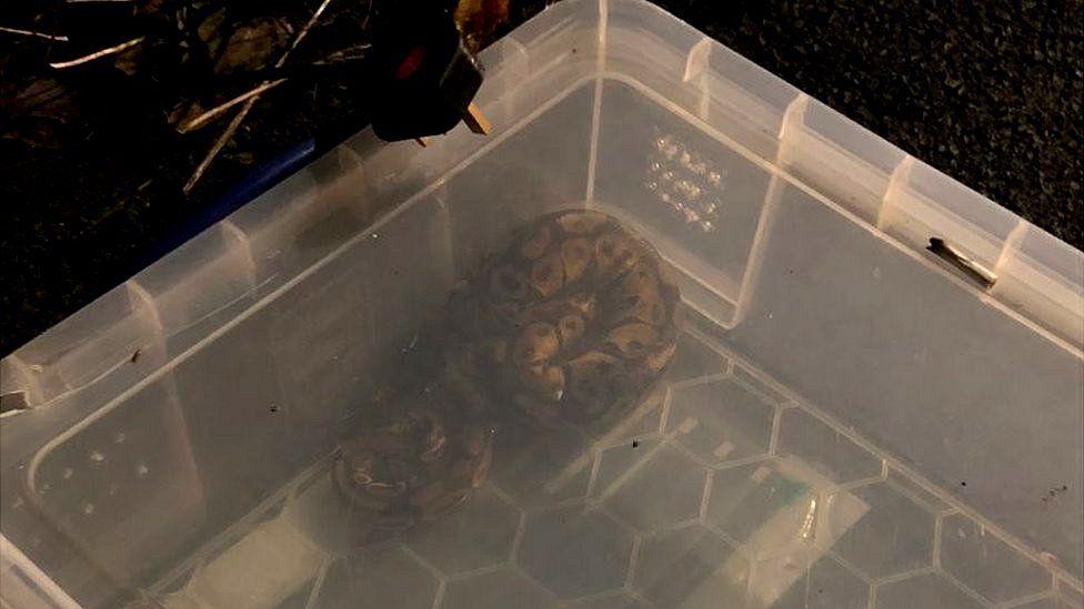 Abandoned python