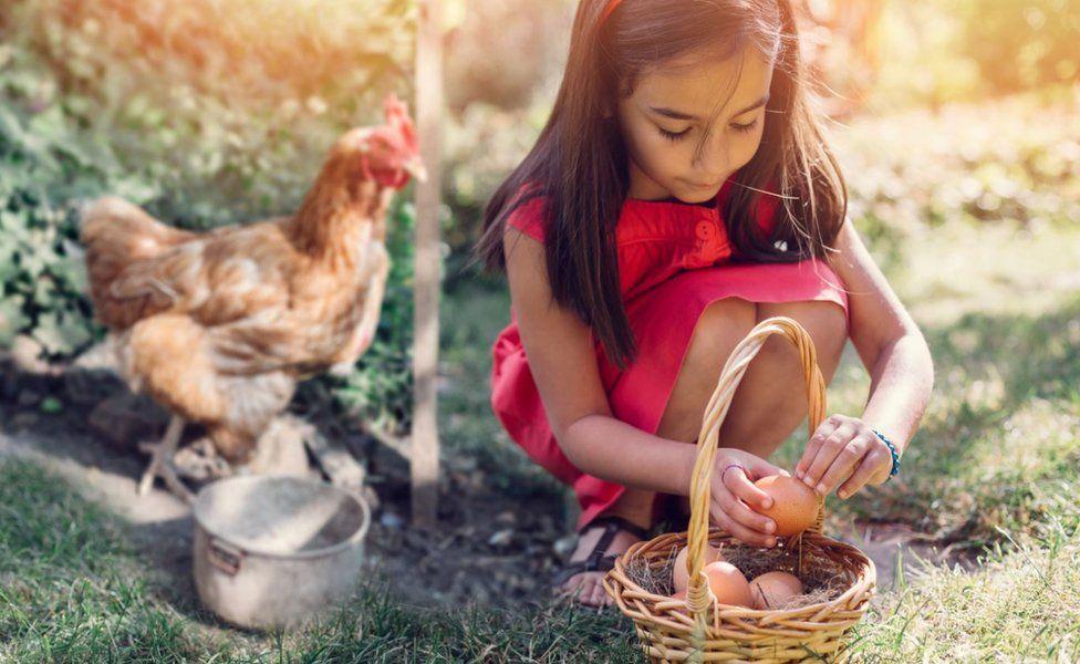 A girl collecting eggs
