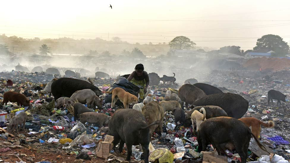 A woman stands among animals as she looks for valuables in a rubbish dump in Freetown on March 28, 2018.