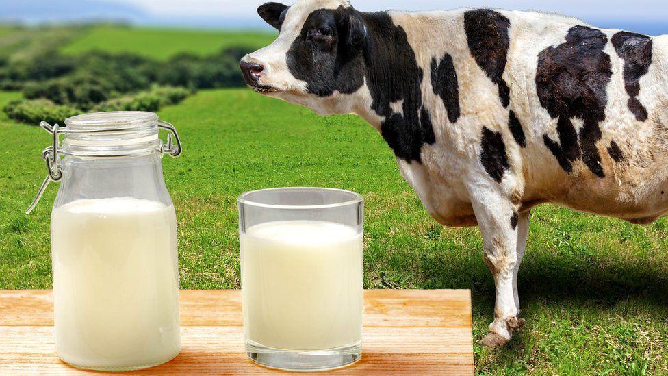 Молоко и его заменители: что полезно, что вредно