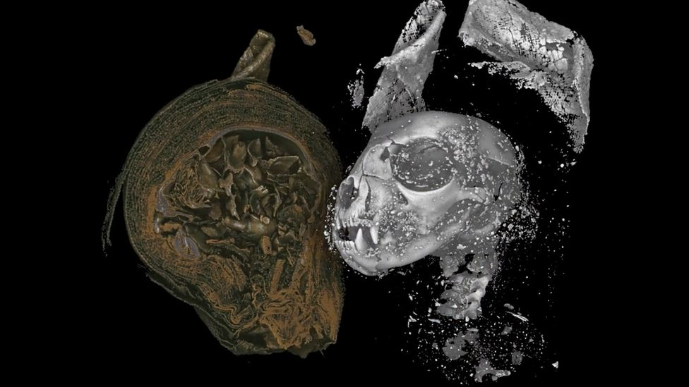 The head of the mummified cat after it had been digitally unwrapped