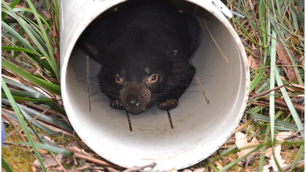 Devil in circular trap