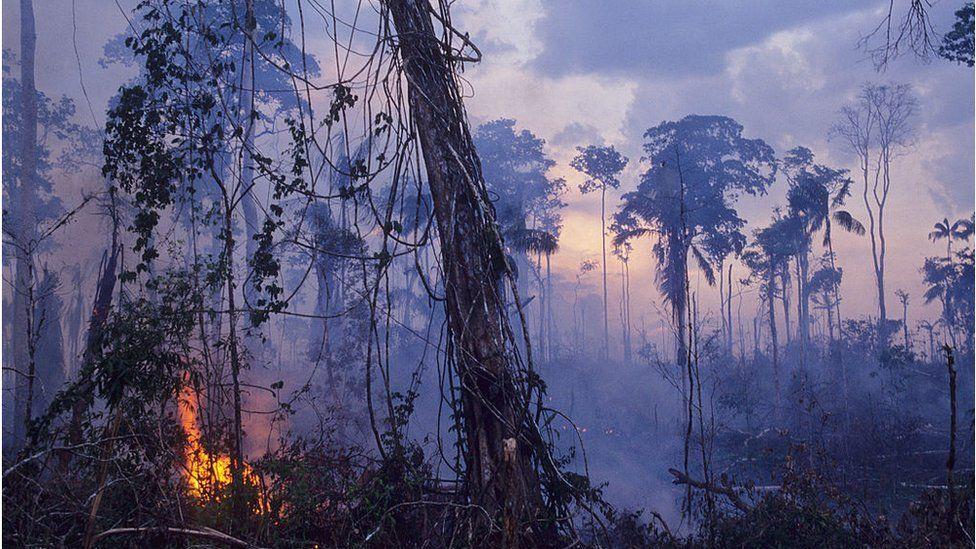 Amazon forest