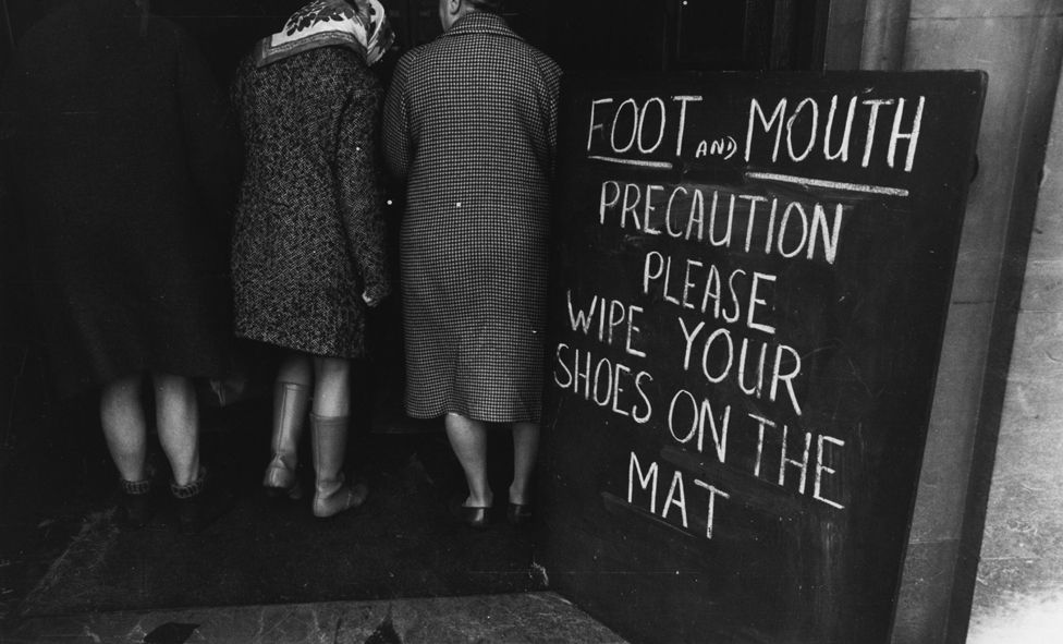 Foot and mouth precautions in 1967