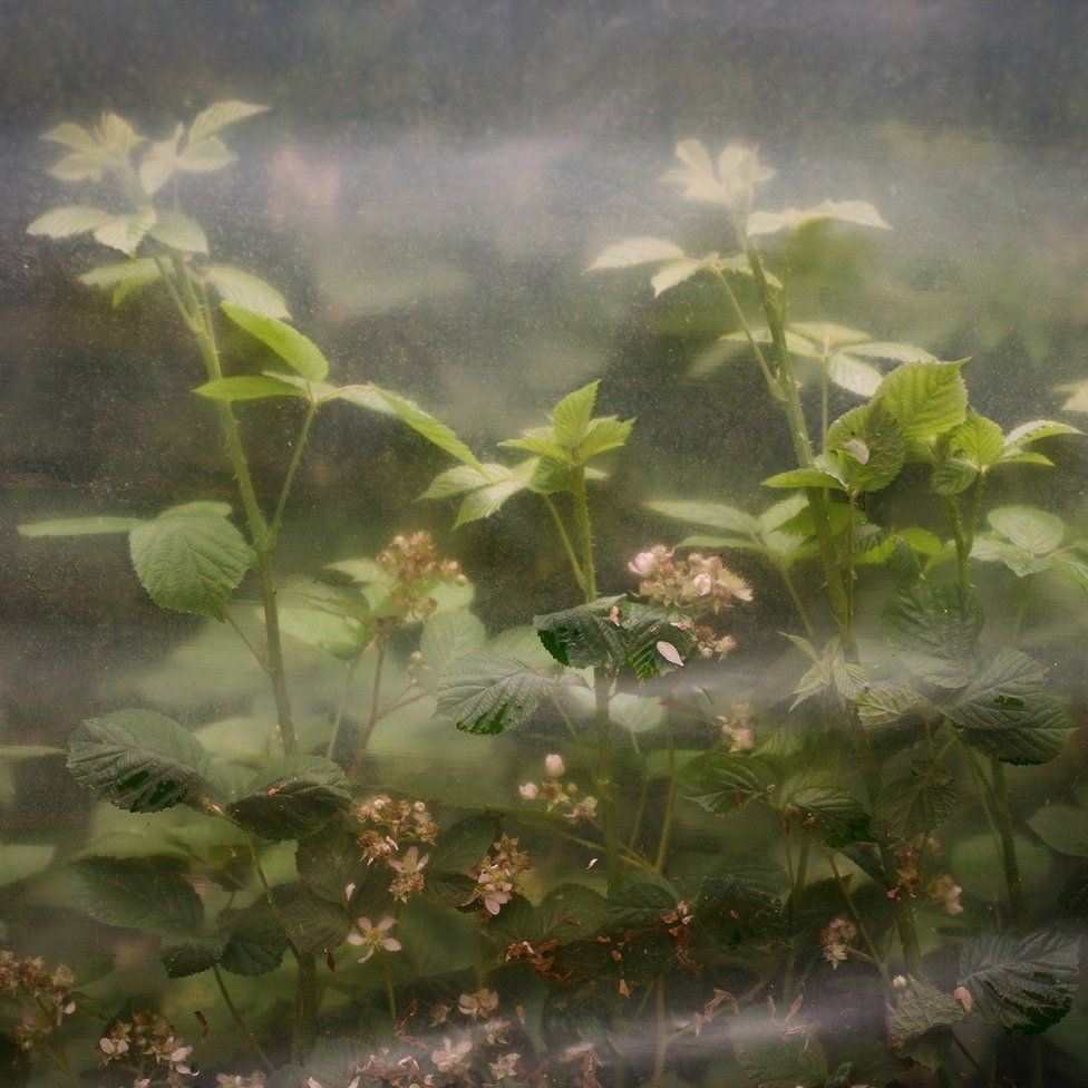 Plants under protective cover