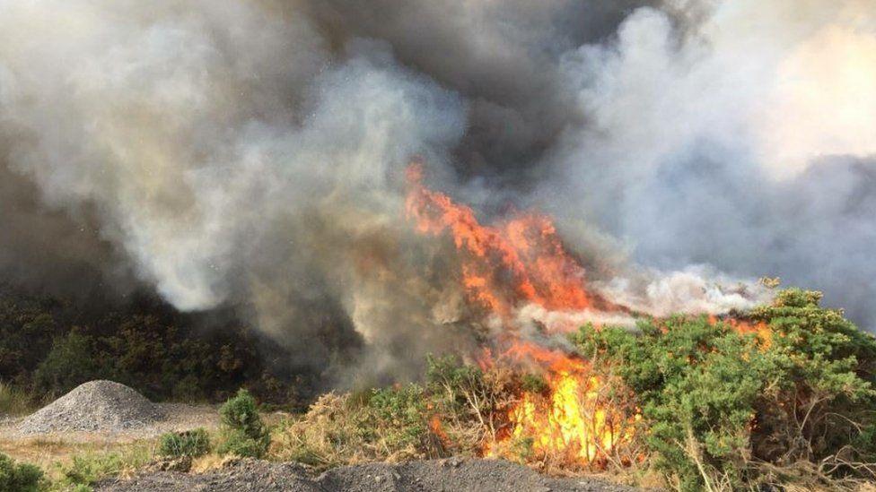 Golspie wildfire