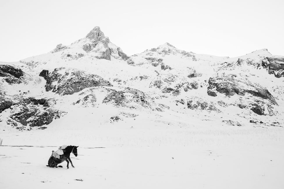 A donkey is getting up after rolling in the snow in the mountains in Albania.