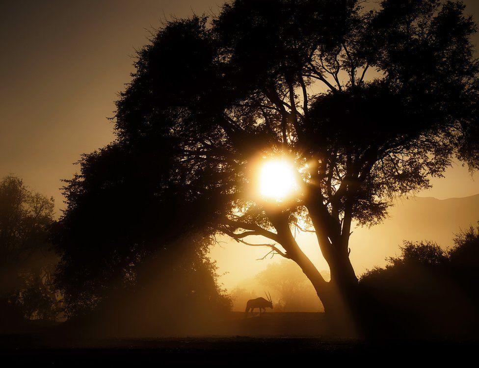 Silhouette photo of a landscape