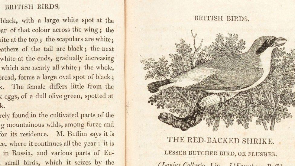Bewick's History of British Birds