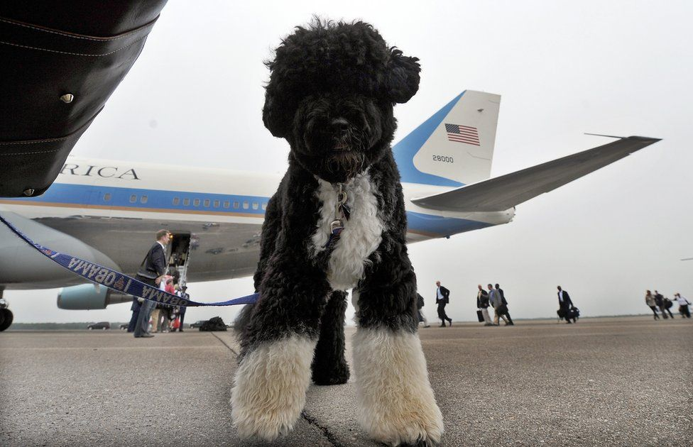 A dog stands next to Air Force One