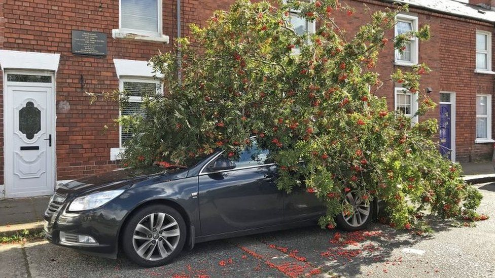 A tree which has fallen onto a car in Belfast
