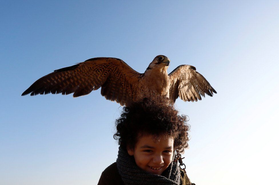 """Ammar, 11, a member of EGY Falconer Club plays with his falcon """"Ashqar"""" during a celebration on World Falconry Day at Borg al-Arab desert in Alexandria, Egypt, November 17, 2018"""