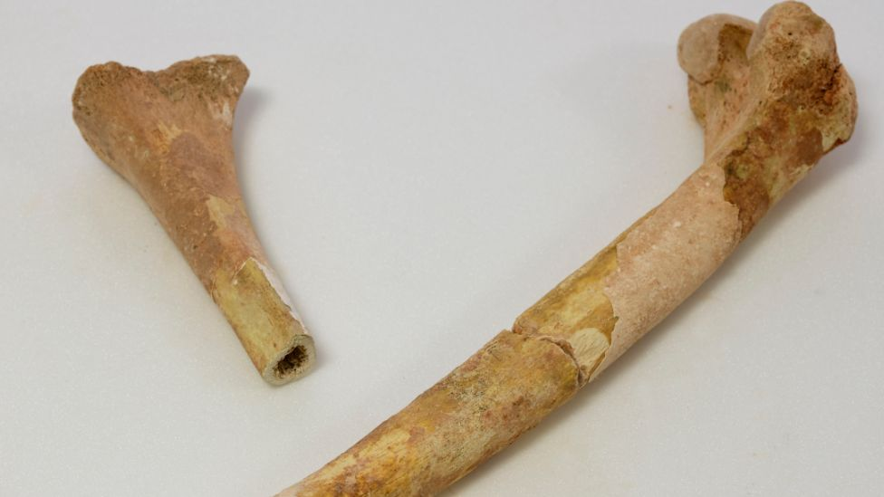 The remains, which include bones from at least seven individuals, were recovered from a newly discovered cave in 1964