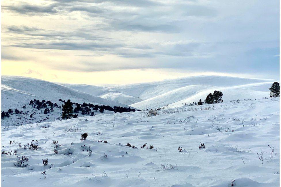 Glen Tanar, Aberdeenshire close to the summit of Baudy Meg