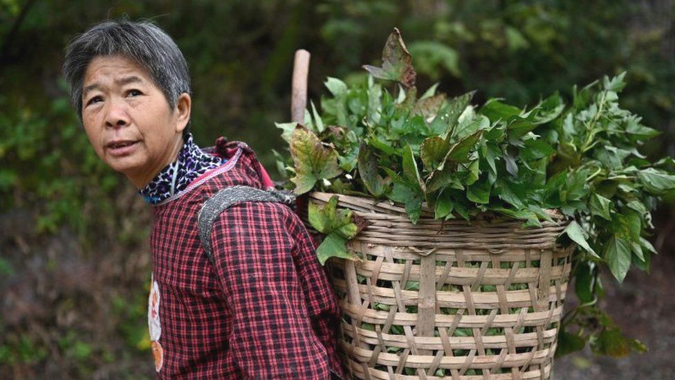 Chinese farmer carrying basket of vegetables on back
