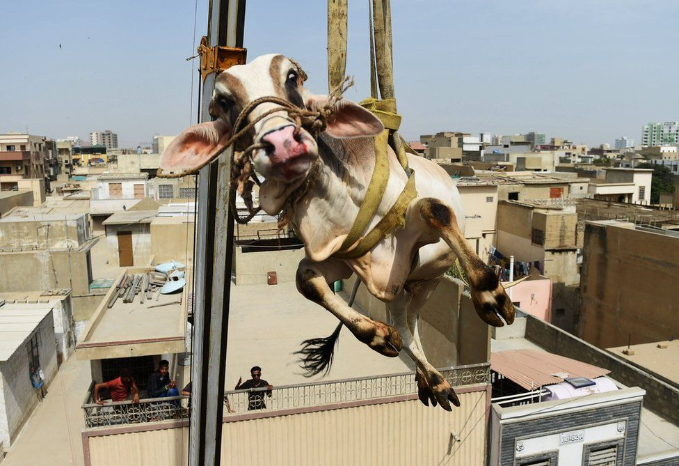 A bull lifted from a building