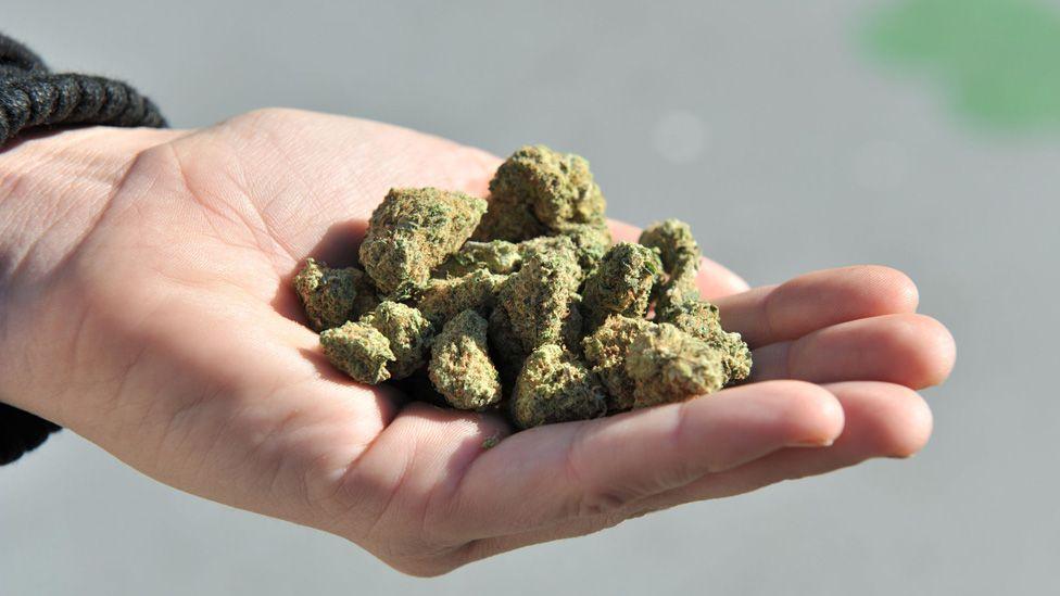 A hand holding cannabis