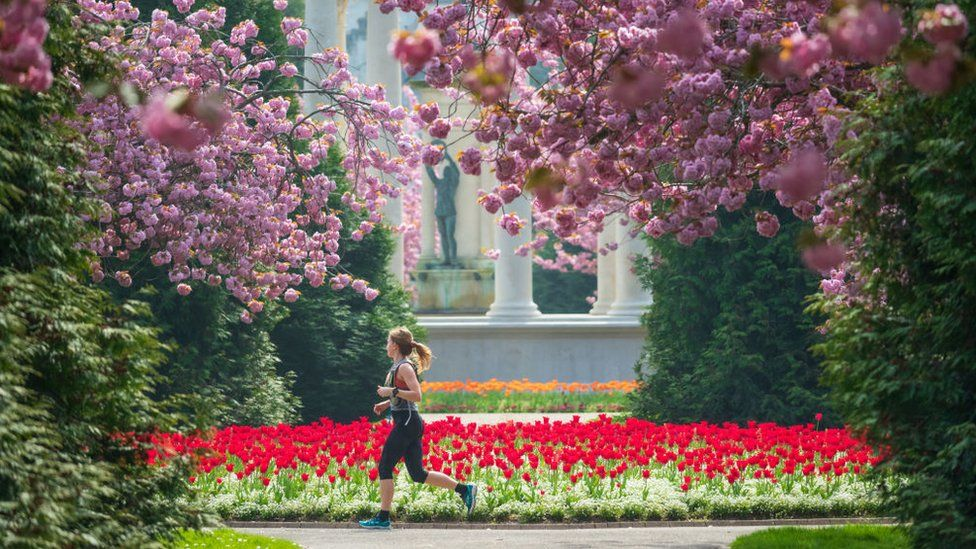 Woman runs by cherry blossoms in Cardiff