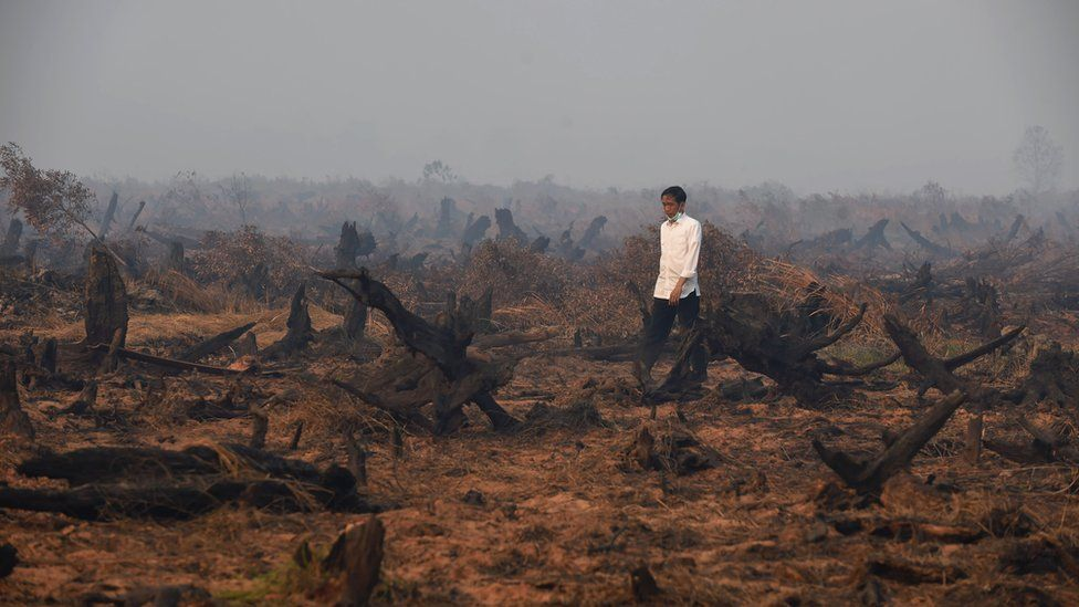 A man walks through burned forests in Indonesia