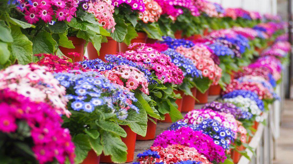 Spring flowers at Duthie Park Winter Gardens