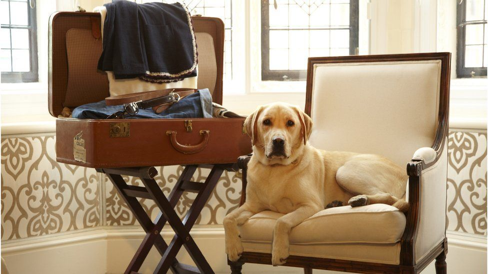 Dog in a hotel room