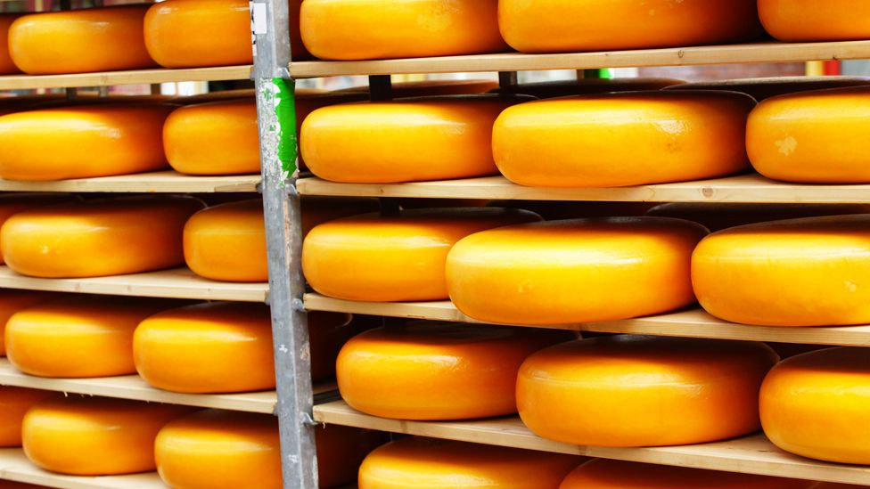 Gouda cheese in the Netherlands