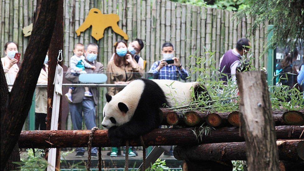 A Nanjing Zoo has suffered from losses due to the pandemic