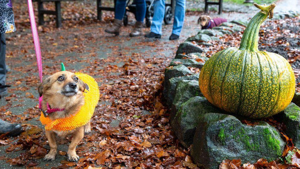 The Great Pumpkin Festival